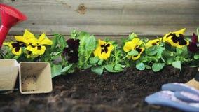 Manos de los jardineros que plantan las flores en pote con suciedad o suelo Concepto que cultiva un huerto almacen de video