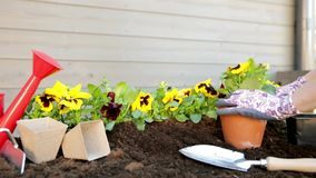 Manos de los jardineros que plantan las flores en pote con suciedad o suelo Concepto que cultiva un huerto almacen de metraje de vídeo