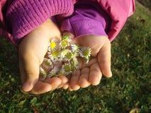 Manos de los niños con la flor Fotografía de archivo