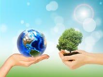 Manos de los seres humanos que sostienen el árbol y la tierra verdes imagen de archivo libre de regalías