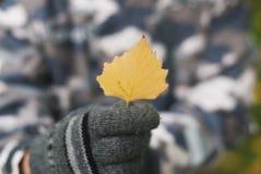 Manos de un niño que sostiene la hoja amarilla del otoño, Imágenes de archivo libres de regalías