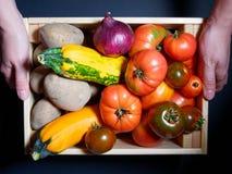 Manos de una mujer joven que sostiene una caja de verduras frescas Imagen de archivo libre de regalías