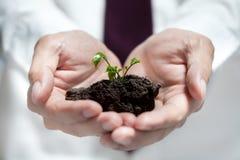 Manos del hombre de negocios que sostienen el árbol verde Concepto de la ecología Imagen de archivo libre de regalías
