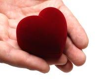 Manos del hombre gifting el corazón el día de tarjeta del día de San Valentín Fotografía de archivo