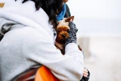 Manos del hombre que sostienen el perro foto de archivo libre de regalías