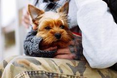 Manos del hombre que sostienen el perro fotografía de archivo libre de regalías