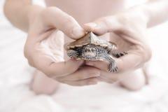 Manos del hombre que sostienen la tortuga Foco selectivo Imagen de archivo