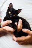 Manos del hombre que sostienen un gato negro del bebé Foto de archivo