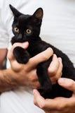 Manos del hombre que sostienen un gato negro del bebé Fotos de archivo