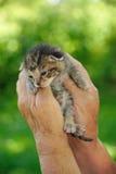 Manos del mayor que sostienen el pequeño gatito Imagen de archivo