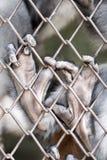Manos del mono Fotos de archivo