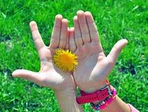 Manos del niño con la flor Imagen de archivo