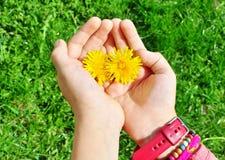Manos del niño que sostienen la flor Imágenes de archivo libres de regalías