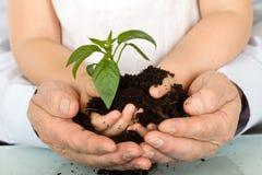 Manos del niño y del adulto que sostienen la nueva planta Foto de archivo libre de regalías