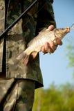 Manos del primer del pescador con los pescados Imagen de archivo