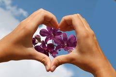 Manos en forma de corazón con la orquídea en fondo del cielo Imagen de archivo