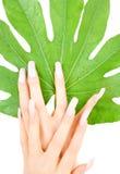 Manos femeninas con la hoja verde Imagen de archivo