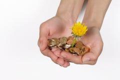 Manos femeninas con una flor y las monedas Imagen de archivo libre de regalías