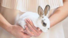 Manos femeninas que sostienen poco conejo blanco, programa de la adopción de los animales domésticos, refugio de animales almacen de metraje de vídeo