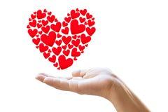 Manos femeninas que toman cuidado del símbolo rojo de los corazones aislado en blanco Imagen de archivo libre de regalías