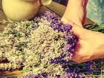 Manos hábiles de la muchacha que ponen los flores de la lavanda en ramo Imágenes de archivo libres de regalías