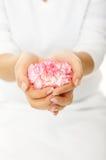 Manos hermosas de la mujer con el gillyflower rosado Fotografía de archivo