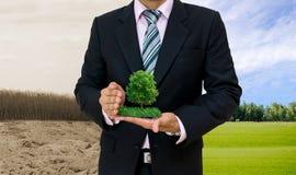 Manos humanas del concepto de la ecología que sostienen el árbol grande de la planta con el día del ambiente mundial imágenes de archivo libres de regalías