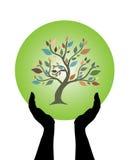 Manos humanas que cuidan el árbol Imágenes de archivo libres de regalías