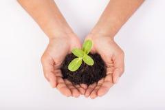Manos humanas que llevan a cabo nuevo concepto de la vida de la pequeña planta verde Imagen de archivo