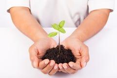 Manos humanas que llevan a cabo nuevo concepto de la vida de la pequeña planta verde Imagen de archivo libre de regalías