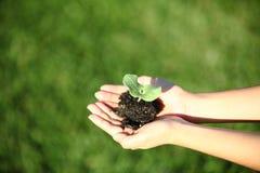 Manos humanas que llevan a cabo nuevo concepto de la vida de la pequeña planta verde Fotos de archivo libres de regalías