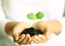 Manos humanas que sostienen la pequeña planta verde Nuevo concepto de la vida Fotos de archivo libres de regalías