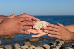 Manos masculinas y femeninas que sostienen la esponja del mar Foto de archivo