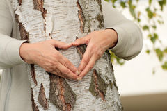 Manos mayores que forman el corazón sobre árbol de abedul Imágenes de archivo libres de regalías