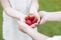 Manos por completo de fresas Fotografía de archivo