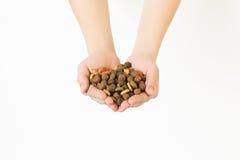 manos por completo de la comida de perro seca en el fondo blanco Foto de archivo libre de regalías