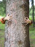 Manos que abrazan el árbol Fotos de archivo libres de regalías