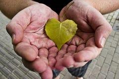 Manos que ahuecan la hoja en forma de corazón Imagen de archivo libre de regalías