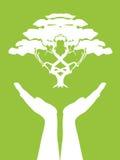 Manos que cuidan el árbol Imagen de archivo