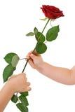 Manos que dan y que reciben una rosa imagen de archivo libre de regalías