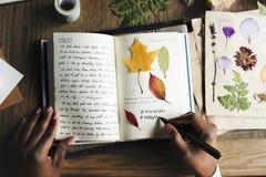 Manos que escriben el detalle de la colección secada de las flores en el cuaderno Han Imagen de archivo libre de regalías