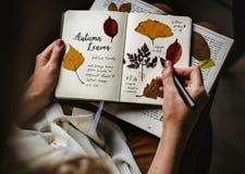 Manos que escriben el detalle de la colección secada de las flores en el cuaderno Han Foto de archivo libre de regalías