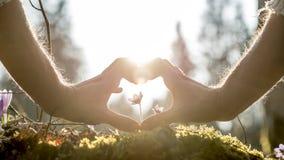 Manos que forman forma del corazón alrededor de la pequeña flor Fotos de archivo libres de regalías
