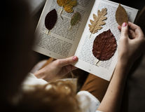 Manos que hacen la colección secada de las flores en el trabajo hecho a mano Hobb del libro Imagenes de archivo