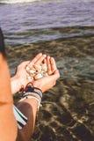 Manos que llevan a cabo cáscaras cogidas del mar imagen de archivo