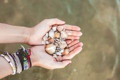 Manos que llevan a cabo cáscaras cogidas del mar imagenes de archivo