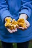Manos que llevan a cabo hacia fuera canterelles amarillos Imágenes de archivo libres de regalías
