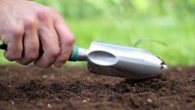 Manos que plantan un almácigo en la tierra almacen de video