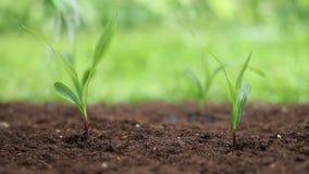 Manos que plantan una semilla y un riego almacen de metraje de vídeo