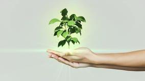 Manos que presentan el crecimiento digital de la planta verde Foto de archivo libre de regalías